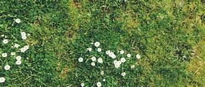 Rasen Vertikutieren Ja Oder Nein : ist mein garten bienenfreundlich ein selbsttest bee careful ~ Buech-reservation.com Haus und Dekorationen
