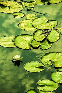 Green... lily pads | Mixed Greens | Pinterest