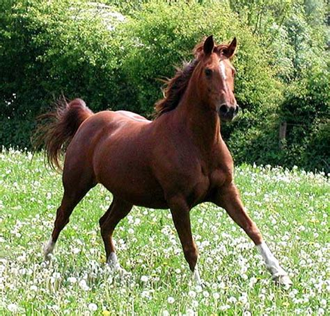 Horse Breeds - Pictures, Description and Information