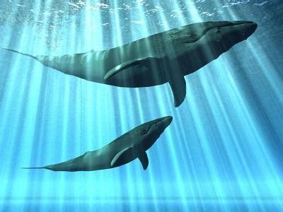 cuisine plus tahiti baleines le cerf est un parent plus proche de la baleine