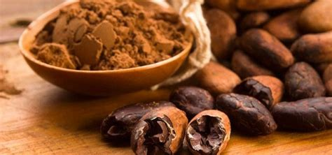 jual biji coklat kering kakao fermentasi