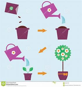 How To Grow A Plant Instructions Stock Vector
