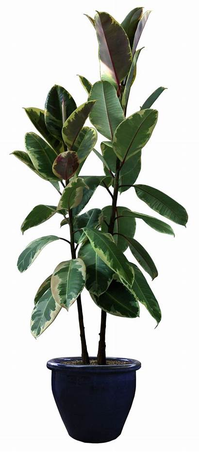 Plants Transparent Trees Others Pleasures Helping Ahmad