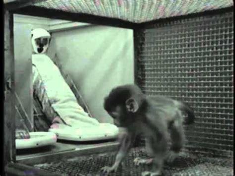 harlows studies  dependency  monkeys youtube