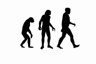 Humans Into Evolved Why Primates Evolve Haven