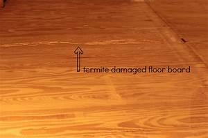 a little hardwood floor repair With termite damage to hardwood floors
