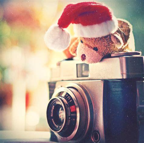 bear camera christmas cute hat photography image