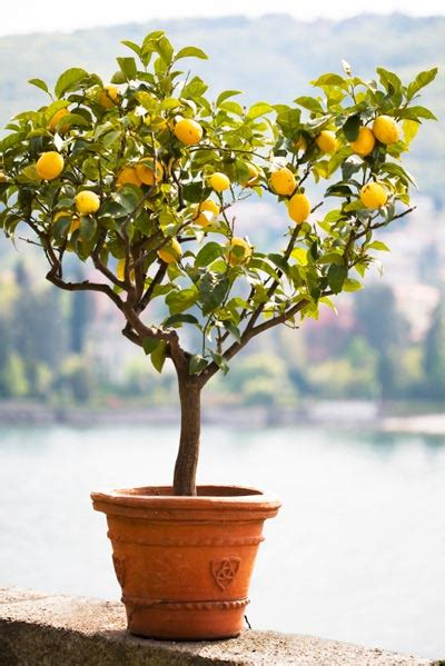 patio plant trends what s brighter blooms nursery