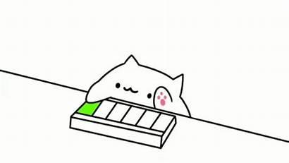 Bongo Cat Wallpapers Cats Meme Keyboard 2048