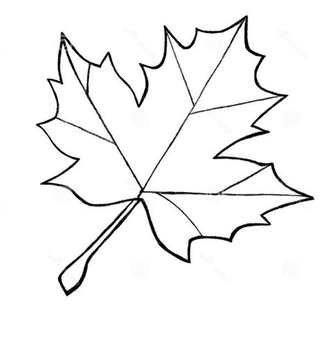 maple leaves coloring pages clipart panda  clipart