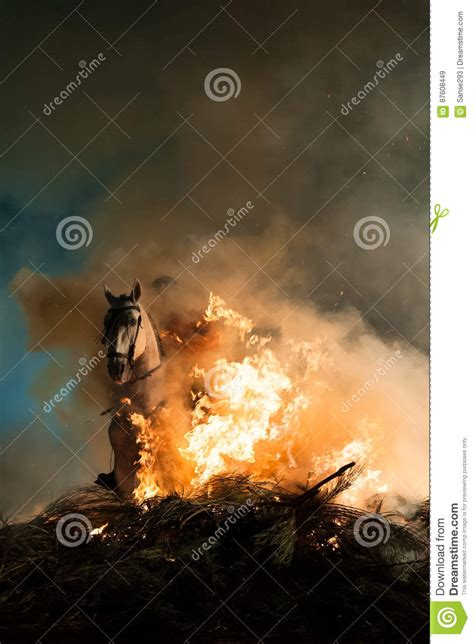 fire horses jumping fear above fuoco paarden springen zonder boven vrees brand saltano timore cavalli sopra senza che without abuse