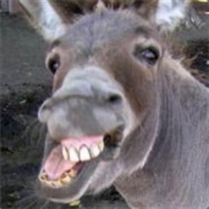 Steam Community Retarded Donkey