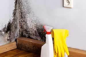 Silberfische Bad Ursache : schimmelspray diese anti schimmelsprays helfen wirklich ~ Markanthonyermac.com Haus und Dekorationen