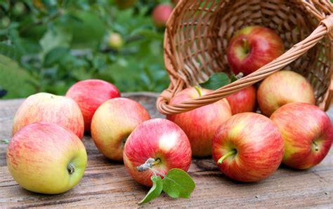 cuisiner la pomme comment cuisiner la pomme sans tracas magazine féminin
