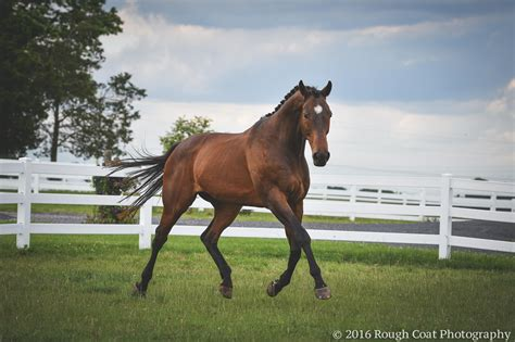 reigns horse perfect nkosi war smith retired ideal match found sue courtesy