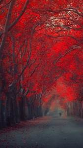 Red Trees Wallpaper