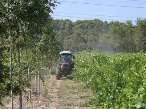 chambre d agriculture herault viticulture oenologie viticulture les impacts sur la