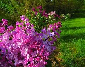 Welche Blumen Blühen Im Mai : was blumen bl hen im mai liste und fotos ~ Eleganceandgraceweddings.com Haus und Dekorationen