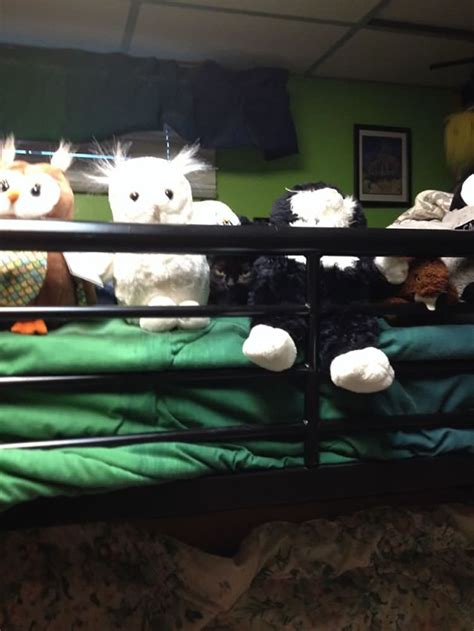 sneaky cats   secretly ninjas top