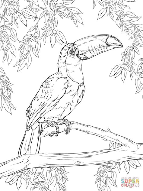 birds and giraffes coloring pages coloriage toucan toco coloriages 224 imprimer gratuits 5947
