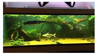 Monster Fish Tank