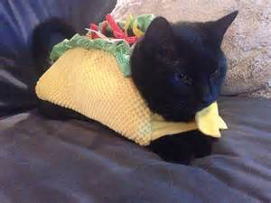 taco cat let s all dress up like tacos for huffpost