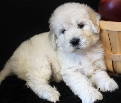11 Of The Cutest Mixed Breed Puppies