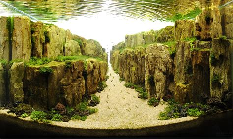 Japanese Aquascape by The Underwater Of Competitive Aquascaping