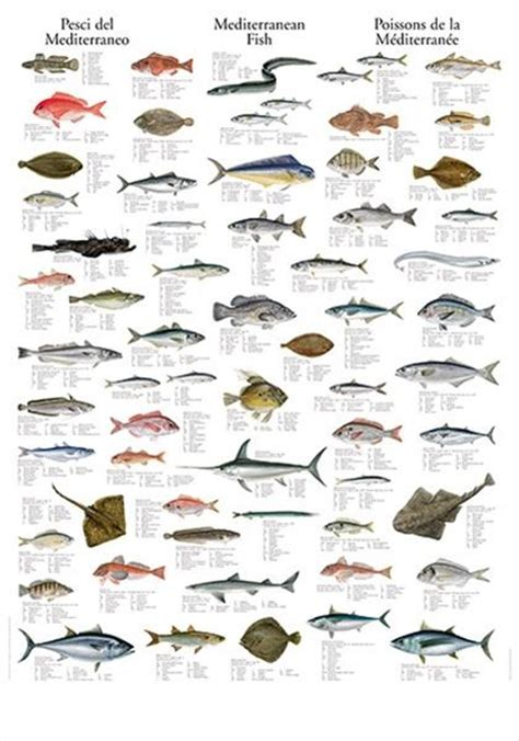 images  identify  fish  pinterest
