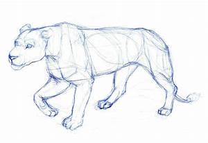 Art Kimistry  Animal Drawings