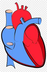 Heart Diagram Blood Flow Oxygenated And Deoxygenated