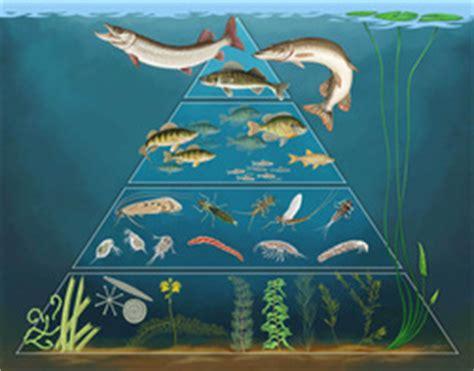 pyramid freshwater