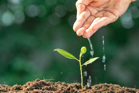 n 228 hrstoffe f 252 r pflanzen was brauchen pflanzen zum leben
