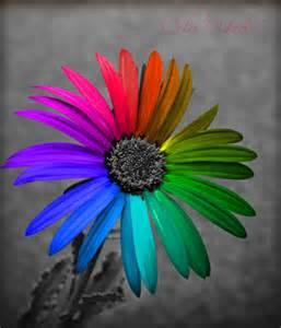Creative Color Wheel Flower Ialoveni Info