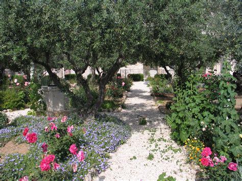 Der Garten Gethsemane  Jerusalem, Bilderserie, Fotos