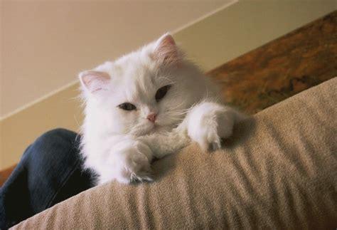 preventing  cat  peeing  thriftyfun