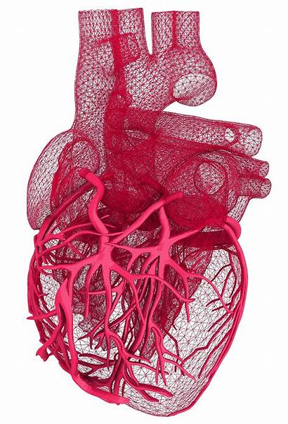 Heart Cardio Cardiovascular Research Structure Cardiology Flat