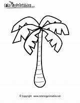 Palm Coloring Tree Printable Pages Colouring Leaf Rainforest Template Drawing Sheet Nature Easy Tropical Line Outline Pixels Plant Printables Clipart sketch template
