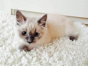 Wo Kann Man Fimo Kaufen : katzen kaufen gallery ~ Lizthompson.info Haus und Dekorationen