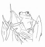 Coloring Pages Frog Printable sketch template