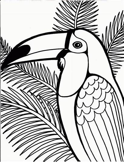 Coloring Pages Bird Animal Adult Teenagers Printable
