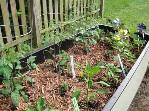 mulch that keeps bugs away growing the gardenloving here
