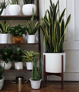 Awesome, Indoor, Plant, House, U2013, Goodsgn