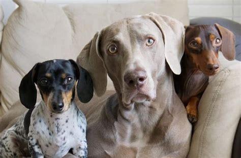 quel est la meilleur cuisine au monde sélection de comptes instagram de chiens