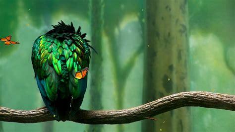 Animated Bird Wallpaper - screenshot review downloads of freeware green bird