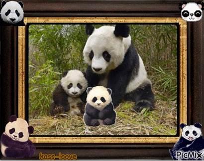 Panda Cadre Picmix Montage