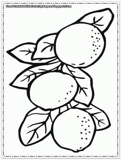 Orange Coloring Tree Pages Printable Fruit Toddlers