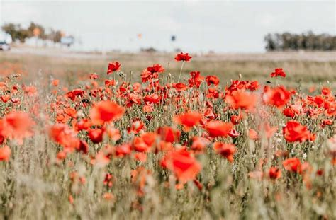 This page contains a national calendar of all 2021 public holidays. Anzac Day Public Holiday 2021 | Urban List