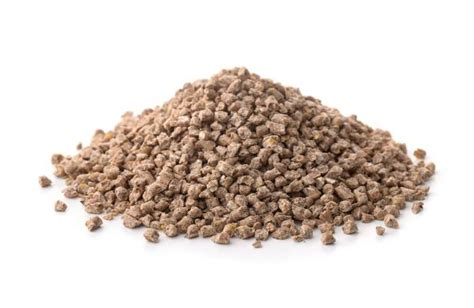 top  articles   animal feed industry