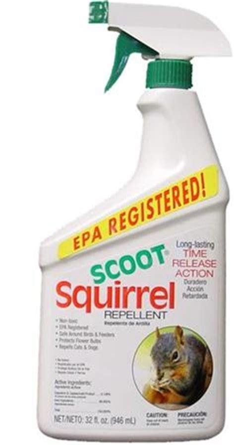 squirrel deterrent for gardens 11 best squirrel repellant images on squirrel
